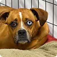 Adopt A Pet :: Sky - Groton, MA
