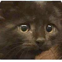 Adopt A Pet :: Kris - Springdale, AR