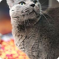 Adopt A Pet :: Lluvia - Appleton, WI