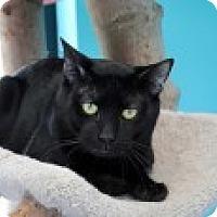 Adopt A Pet :: Noodle - Marietta, GA