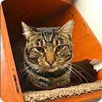 Adopt A Pet :: Jermaine - Delaware, OH