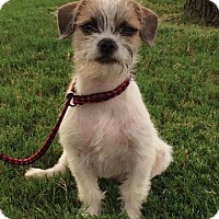 Adopt A Pet :: Katie - Fort Worth, TX