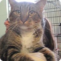 Adopt A Pet :: Oakley - Reeds Spring, MO
