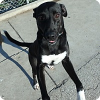 Adopt A Pet :: Samara - Seguin, TX