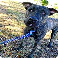Adopt A Pet :: ROSS - Tavares, FL