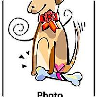 Adopt A Pet :: Girlfriend - Encinitas, CA
