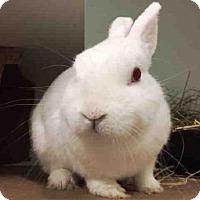 Adopt A Pet :: THUNDER - Brooklyn, NY