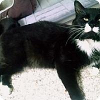 Adopt A Pet :: Samson - Des Moines, IA