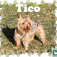 Adopt A Pet :: Tico - Fallston, MD