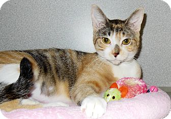 Calico Cat for adoption in Weatherford, Texas - Zoey