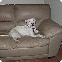 Adopt A Pet :: Blanca / Courtesy Posting - Tucson, AZ