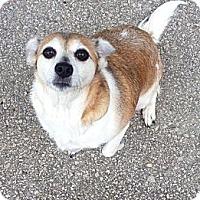 Adopt A Pet :: Tulip - Muskegon, MI