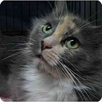 Adopt A Pet :: Sophie - Westfield, MA