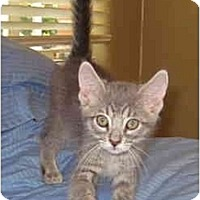 Adopt A Pet :: D2 - Davis, CA