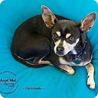 Adopt A Pet :: Christabelle - Phoenix, AZ