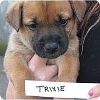 Adopt A Pet :: Trixie - nashville, TN