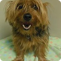 Adopt A Pet :: CoCo - Gary, IN