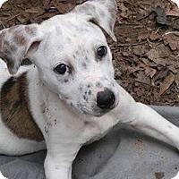 Adopt A Pet :: Milkbone - Updated - West Warwick, RI