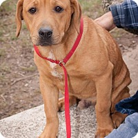 Adopt A Pet :: Rob Kardashian - Oxford, NC