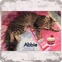 Adopt A Pet :: Abbie - Harrisburg, NC