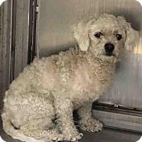 Adopt A Pet :: BRAZIL - Martinez, CA