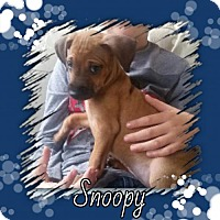 Adopt A Pet :: Snoopy - Genoa City, WI