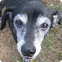 Adopt A Pet :: Jainway - Port Jervis, NY