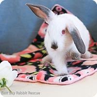 Adopt A Pet :: Lillie - Livermore, CA