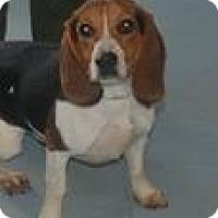 Adopt A Pet :: B.B. - Columbia, SC