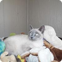 Adopt A Pet :: Andy - Clarksville, AR