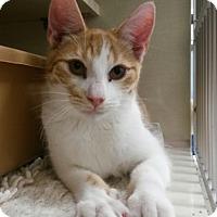 Adopt A Pet :: Fergus - Berkeley Hts, NJ