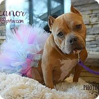 Adopt A Pet :: Ella - Cherry Hill, NJ