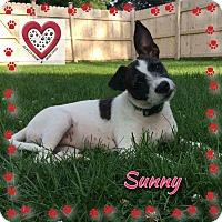 Adopt A Pet :: Sunny - Elgin, IL