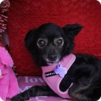 Adopt A Pet :: Zest - Houston, TX
