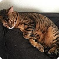Adopt A Pet :: Quick - Corona, CA