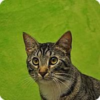 Adopt A Pet :: Katrina - Foothill Ranch, CA