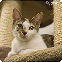 Adopt A Pet :: Twiggy - New Port Richey, FL