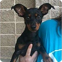Adopt A Pet :: Squirt - Arlington, TX