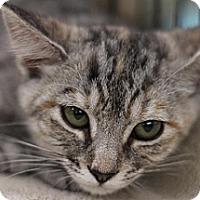 Adopt A Pet :: Ash - Sacramento, CA