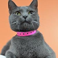 Adopt A Pet :: Stella 11719 - Atlanta, GA