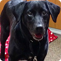 Adopt A Pet :: Hallie - Plainfield, CT