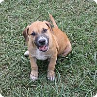 Adopt A Pet :: Harriet-PENDING! - Marion, AR