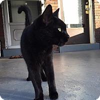 Adopt A Pet :: zz 'Teddy' courtesy post - Cincinnati, OH