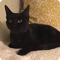 Adopt A Pet :: Ravenia - Addison, IL