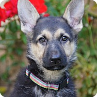 Adopt A Pet :: Diana von Geneva - Thousand Oaks, CA