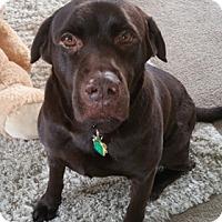 Adopt A Pet :: Seala - Broomfield, CO