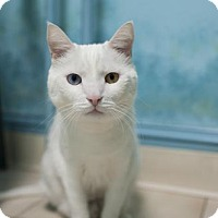 Adopt A Pet :: Static - East Norriton, PA