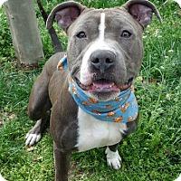 Adopt A Pet :: BLAKE - Kimberton, PA