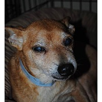 Adopt A Pet :: Sebastian - Crowley, LA