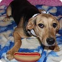 Adopt A Pet :: Osiris - Waupaca, WI